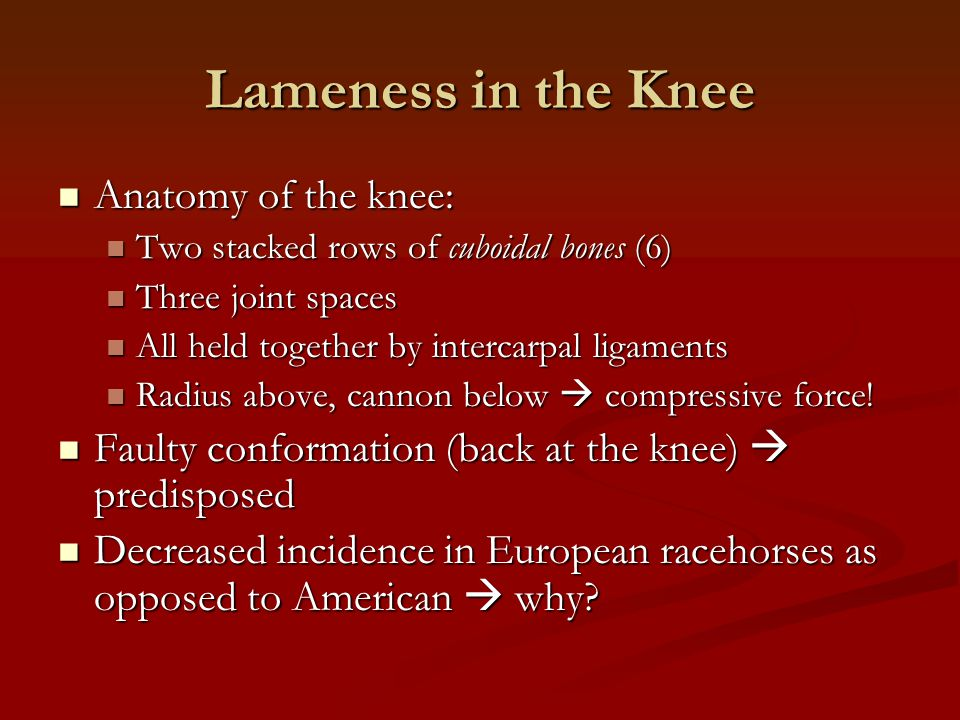 Lameness in the Knee Anatomy of the knee: