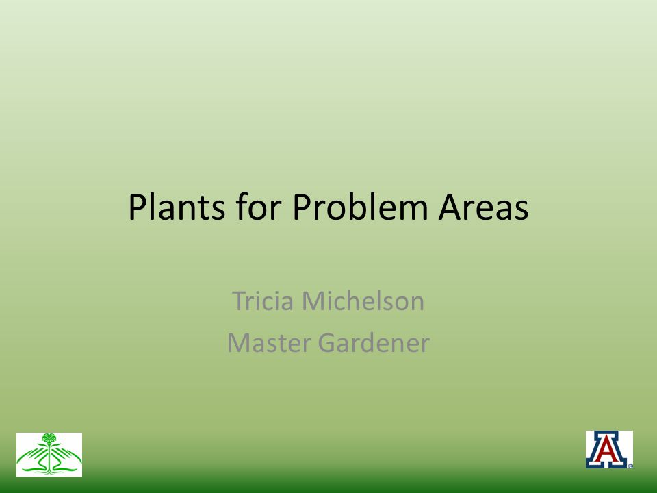 Plants for Problem Areas