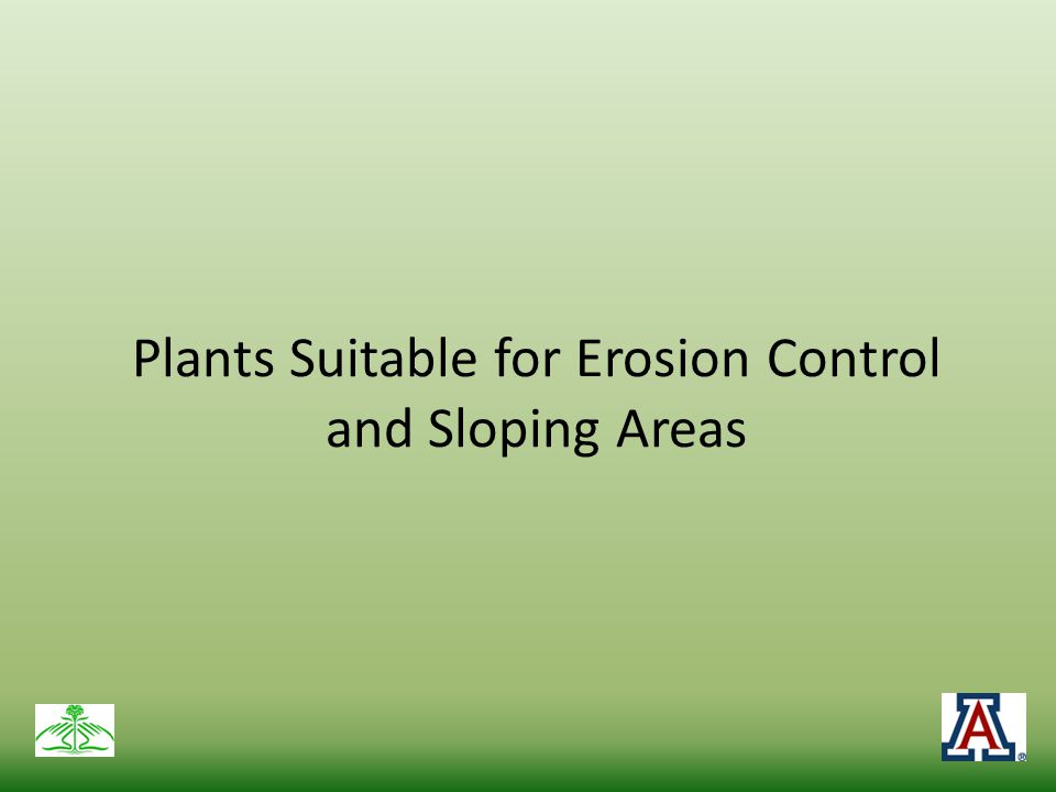 Plants Suitable for Erosion Control and Sloping Areas