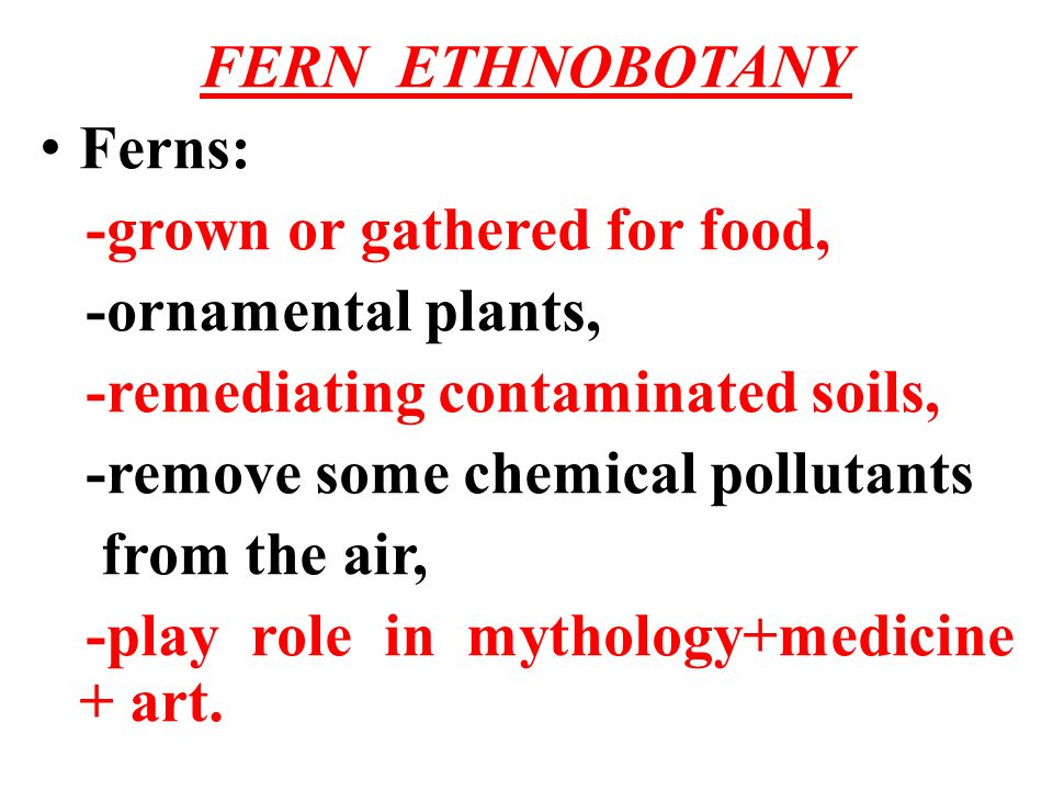 FERN ETHNOBOTANY Ferns: -grown or gathered for food, -ornamental plants, -remediating contaminated soils,