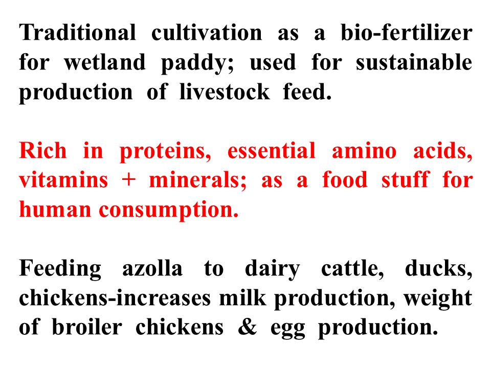 Traditional cultivation as a bio-fertilizer for wetland paddy; used for sustainable production of livestock feed.
