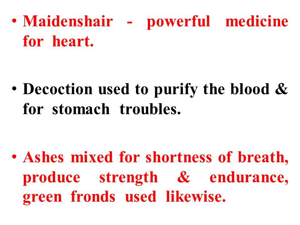 Maidenshair - powerful medicine for heart.