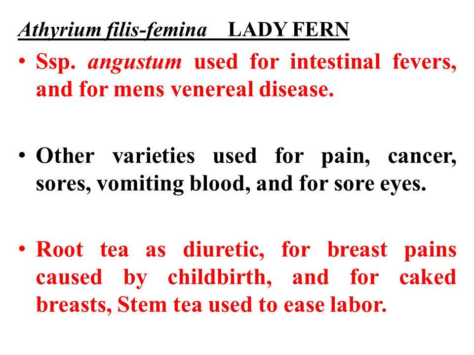 Athyrium filis-femina LADY FERN