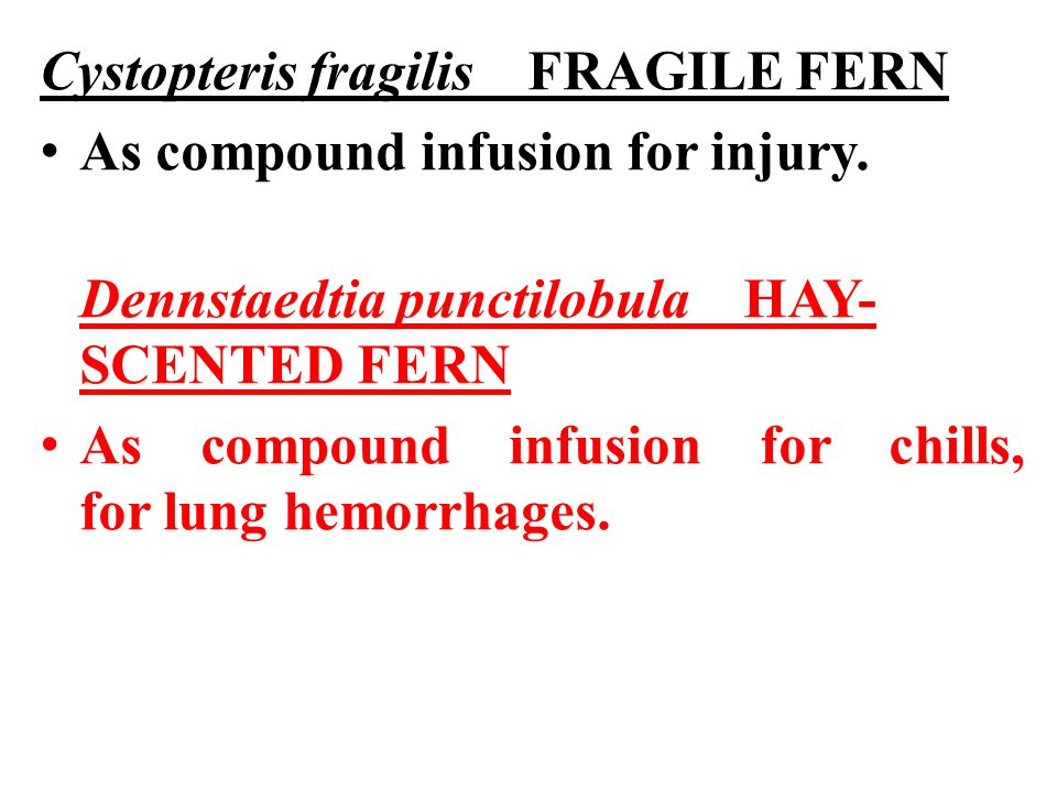 Cystopteris fragilis FRAGILE FERN