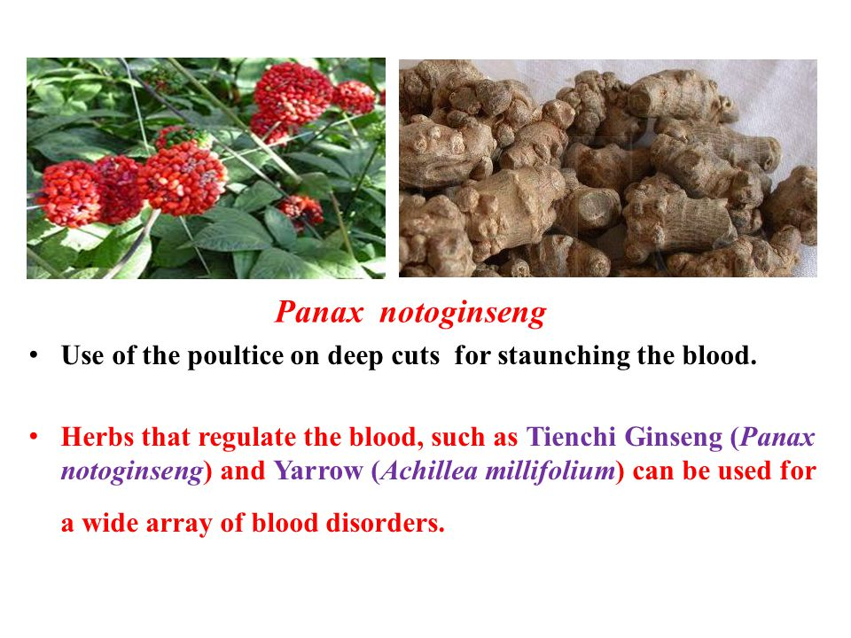 Panax notoginseng Use of the poultice on deep cuts for staunching the blood.