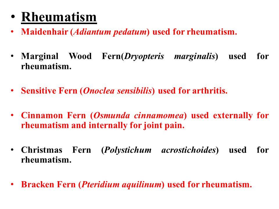 Rheumatism Maidenhair (Adiantum pedatum) used for rheumatism.