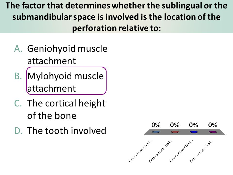 Geniohyoid muscle attachment Mylohyoid muscle attachment