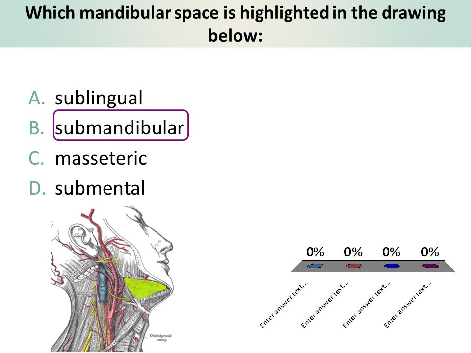 Which mandibular space is highlighted in the drawing below: