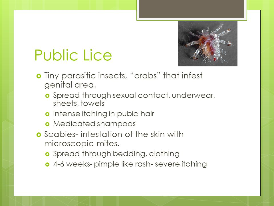 Public Lice Tiny parasitic insects, crabs that infest genital area.