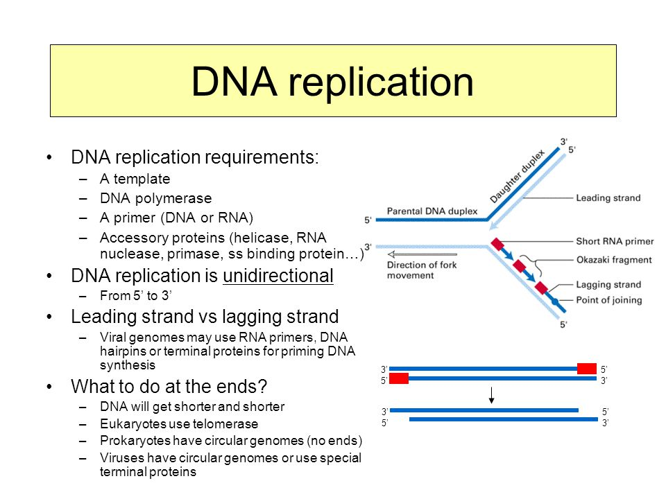 DNA replication DNA replication requirements: