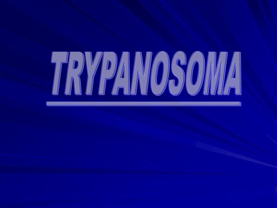 TRYPANOSOMA
