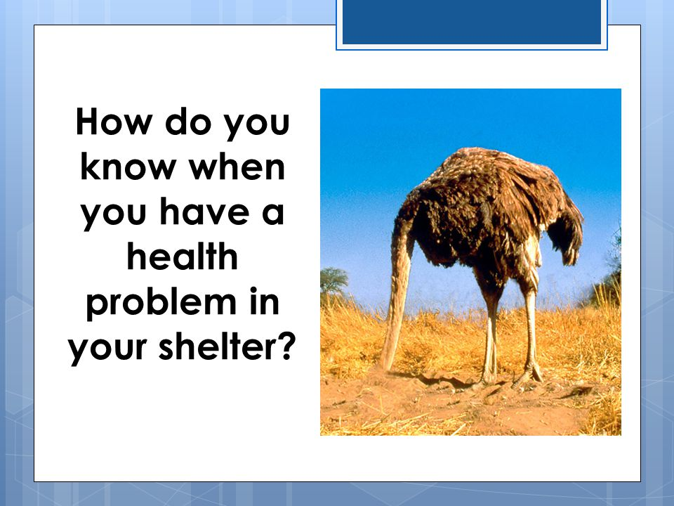 How do you know when you have a health problem in your shelter