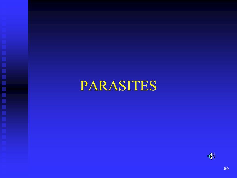 PARASITES Read the slide