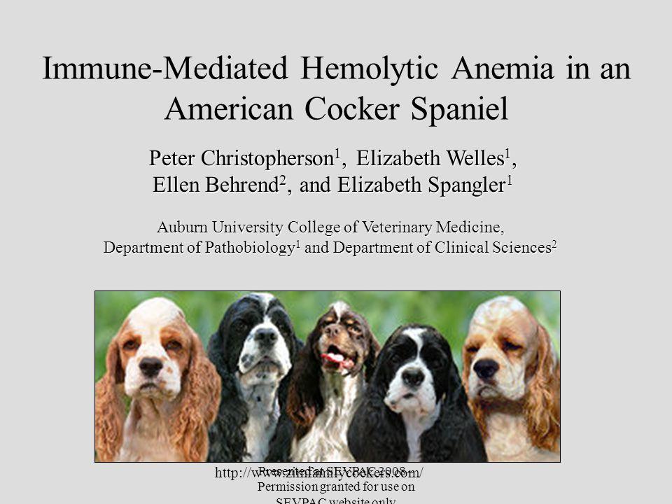 Immune-Mediated Hemolytic Anemia in an American Cocker Spaniel