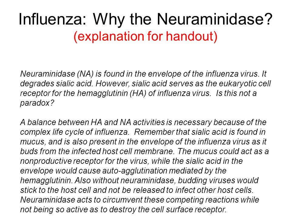 Influenza: Why the Neuraminidase