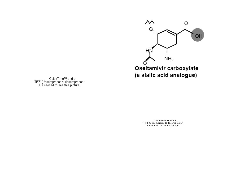 Oseltamivir carboxylate (a sialic acid analogue)