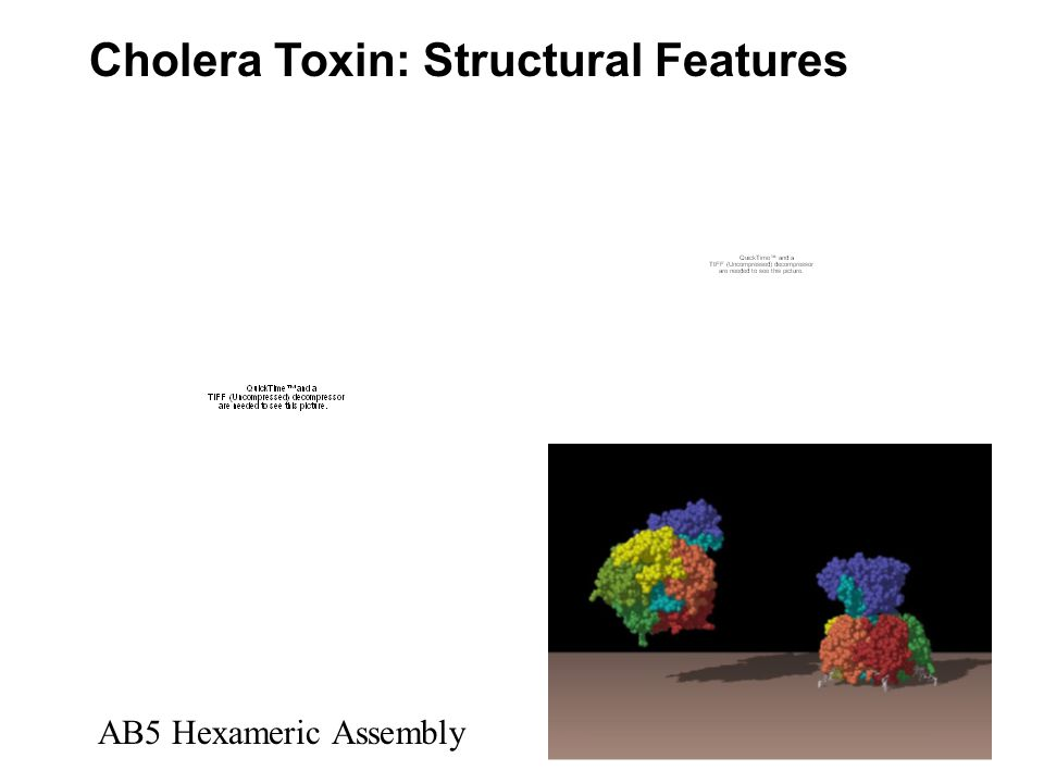 Cholera Toxin: Structural Features