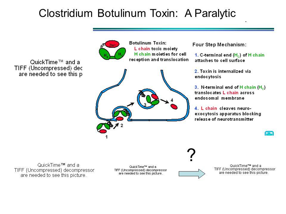 Clostridium Botulinum Toxin: A Paralytic