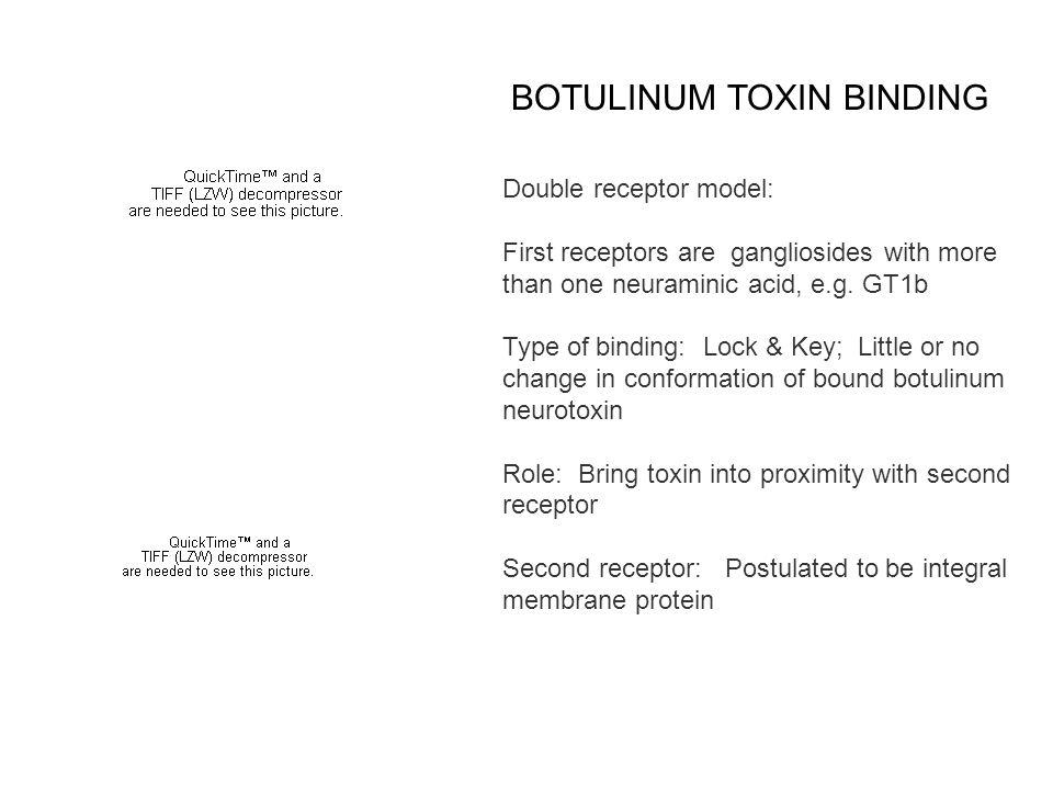 BOTULINUM TOXIN BINDING