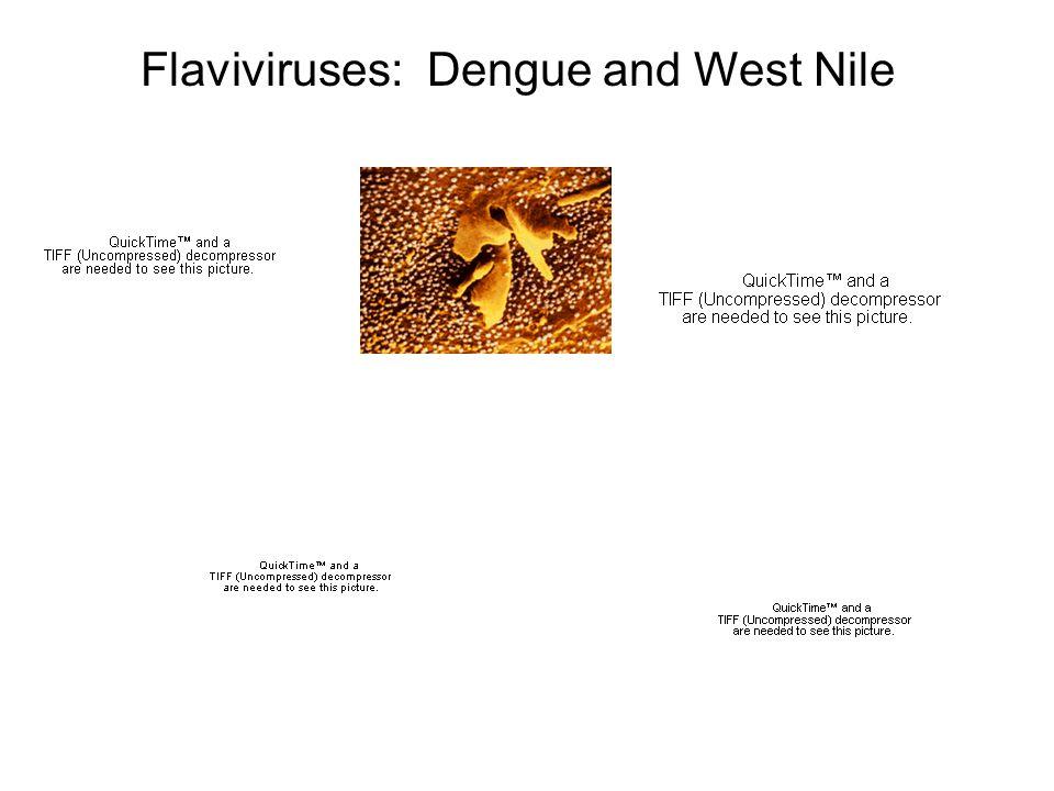 Flaviviruses: Dengue and West Nile