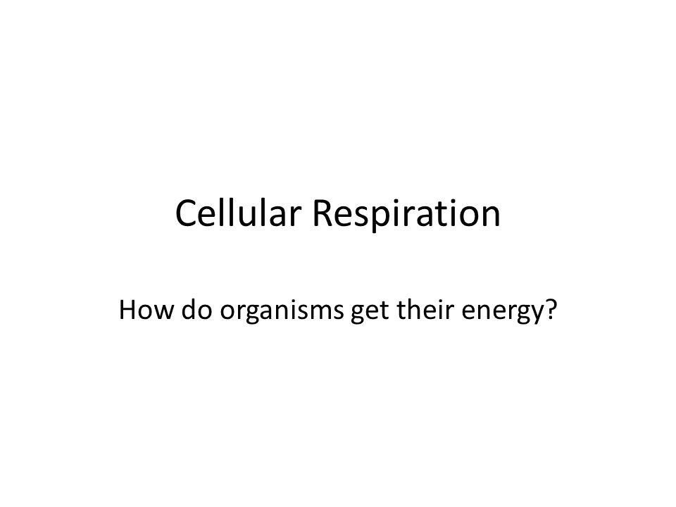 How do organisms get their energy