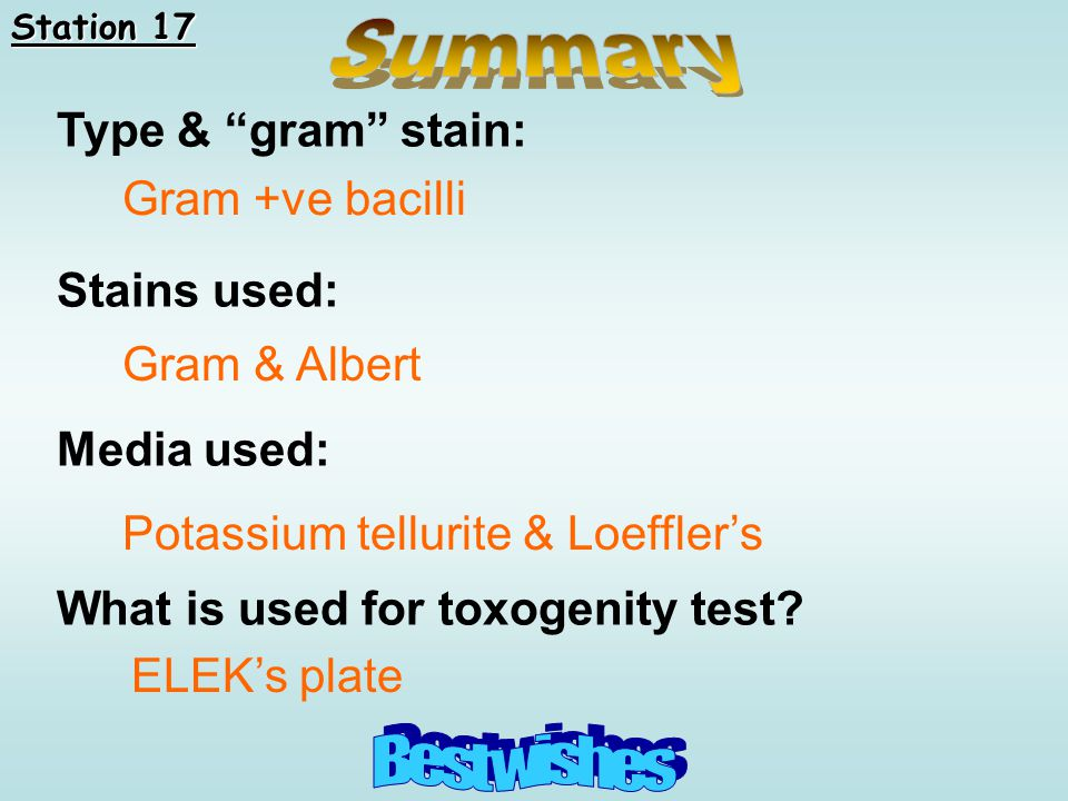 Summary Best wishes Type & gram stain: Stains used: Gram +ve bacilli