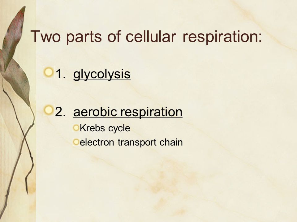 Two parts of cellular respiration: