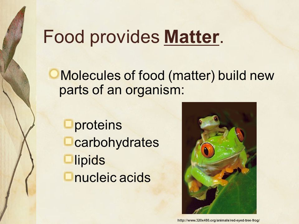 Food provides Matter. Molecules of food (matter) build new parts of an organism: proteins. carbohydrates.