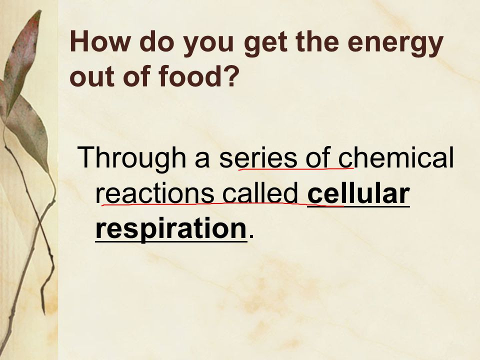 How do you get the energy out of food
