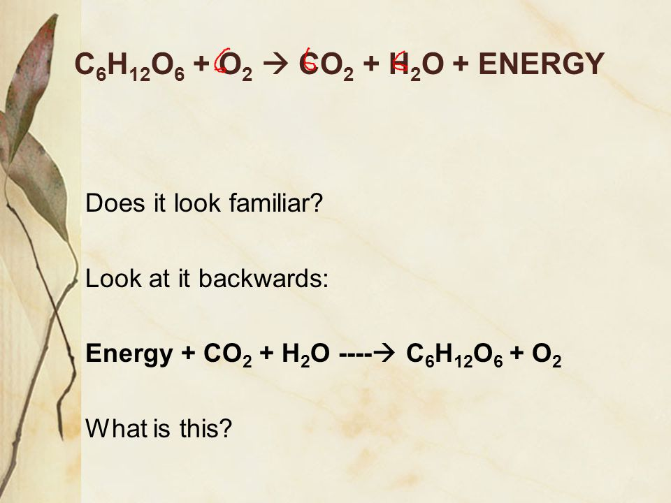 C6H12O6 + O2  CO2 + H2O + ENERGY Does it look familiar