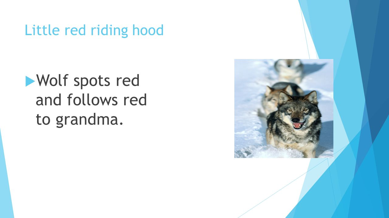 Wolf spots red and follows red to grandma.