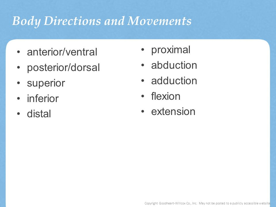 Body Directions and Movements