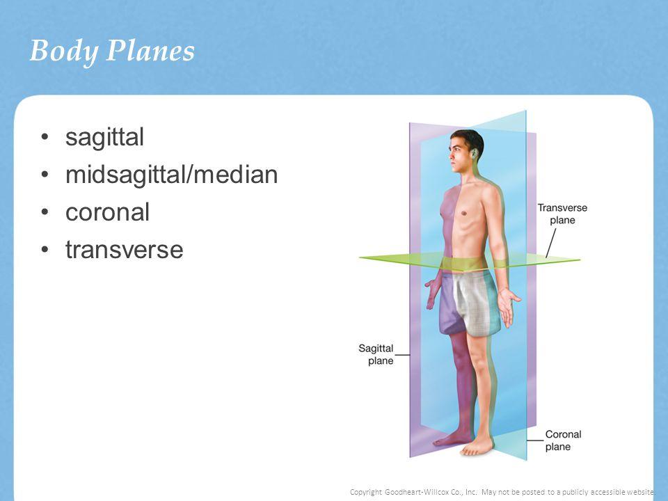 Body Planes sagittal midsagittal/median coronal transverse