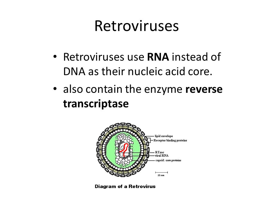 Retroviruses Retroviruses use RNA instead of DNA as their nucleic acid core.
