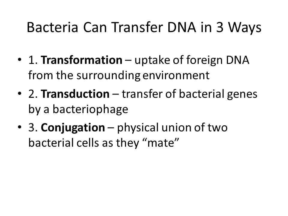 Bacteria Can Transfer DNA in 3 Ways