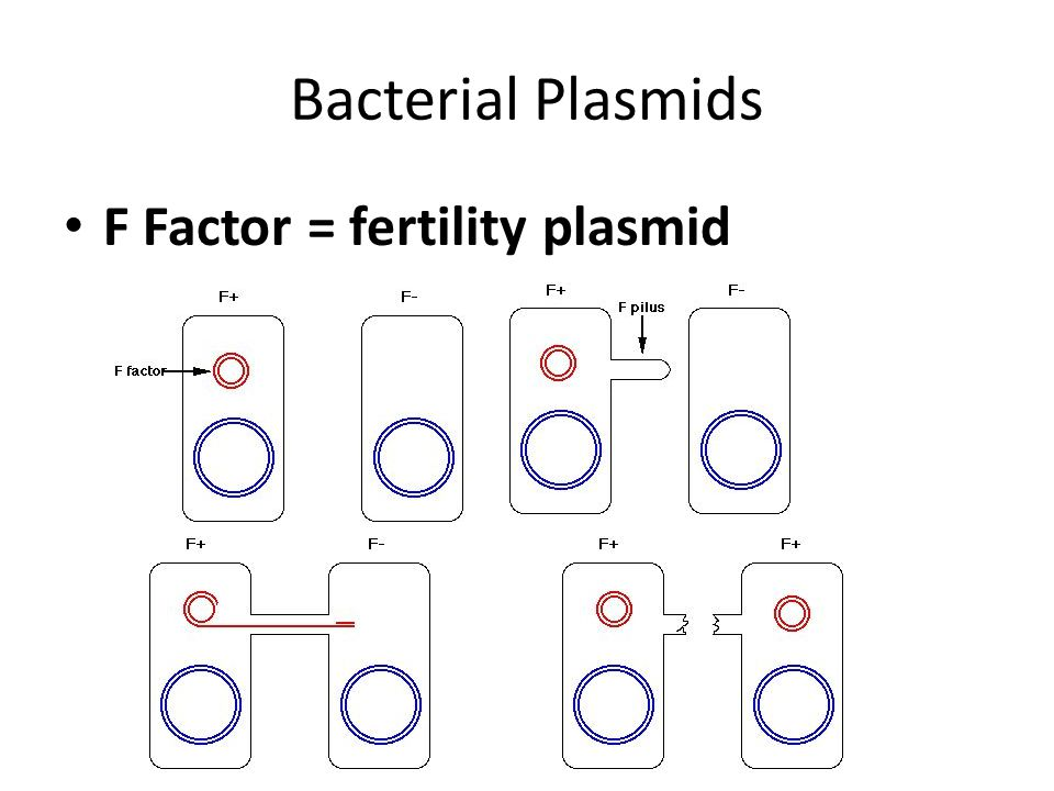 Bacterial Plasmids F Factor = fertility plasmid