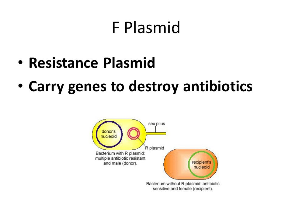 F Plasmid Resistance Plasmid Carry genes to destroy antibiotics