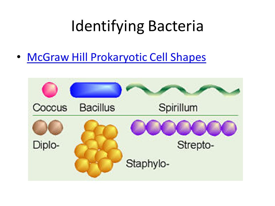 Identifying Bacteria McGraw Hill Prokaryotic Cell Shapes