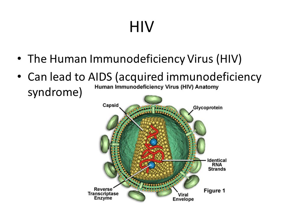 HIV The Human Immunodeficiency Virus (HIV)
