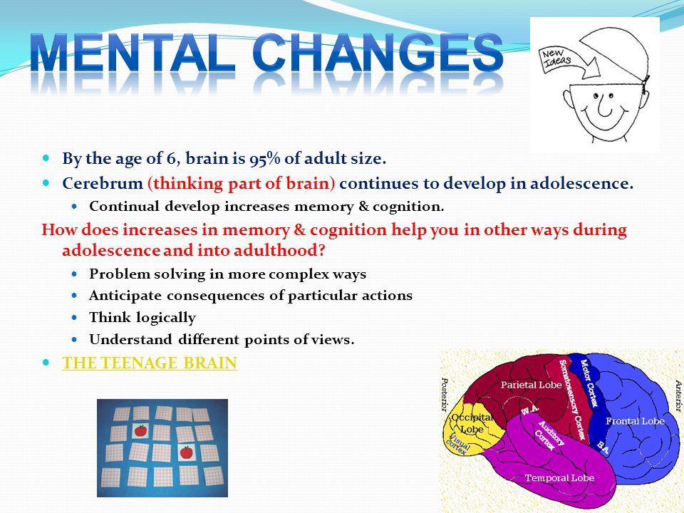 MENTAL CHANGES By the age of 6, brain is 95% of adult size.