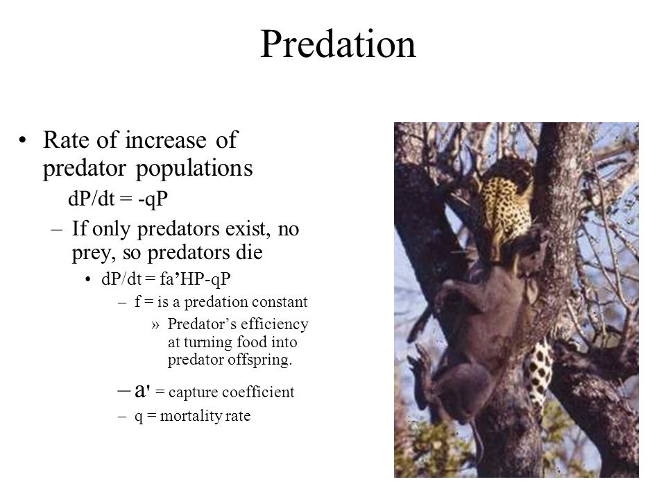 Predation Rate of increase of predator populations
