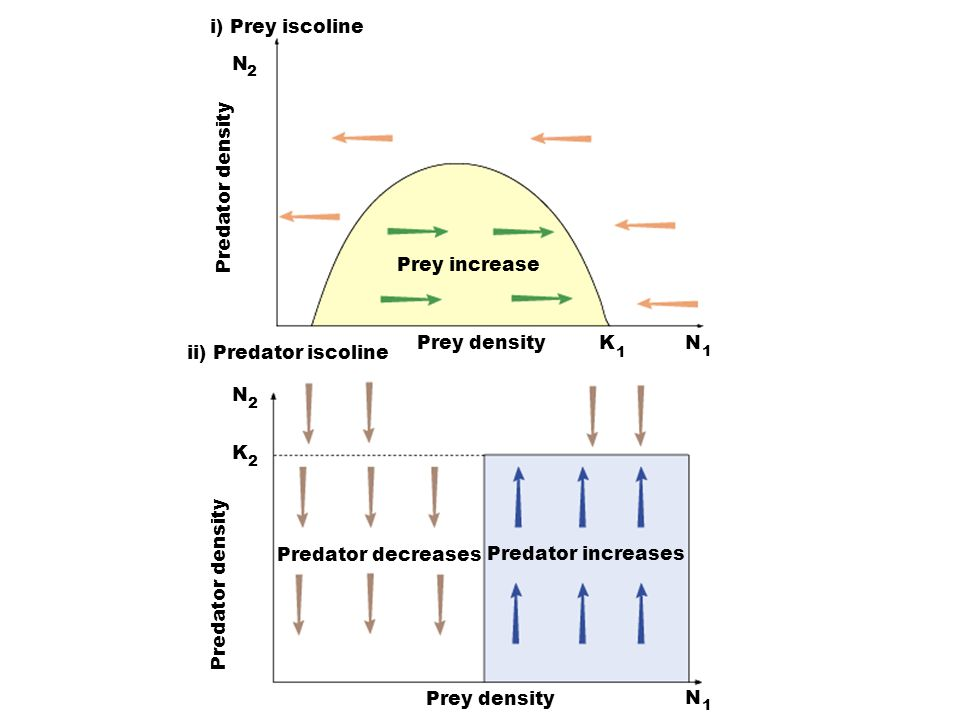 i) Prey iscoline N Predator density Prey increase Prey density K N