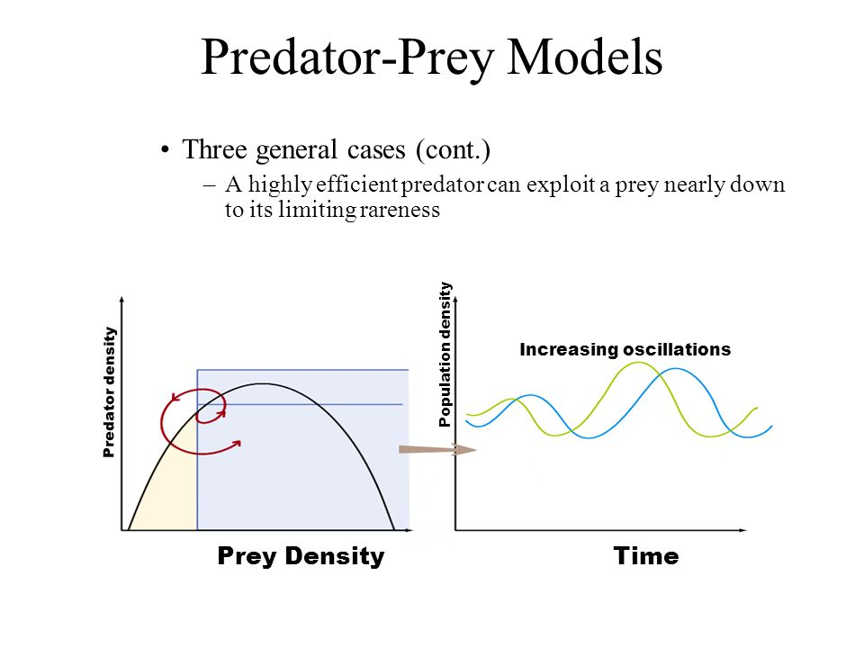 Predator-Prey Models Three general cases (cont.)