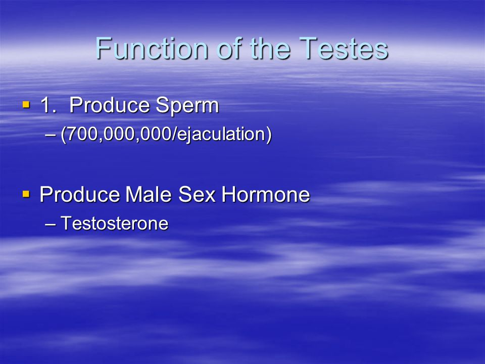Function of the Testes 1. Produce Sperm Produce Male Sex Hormone