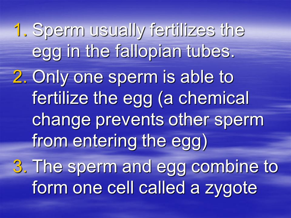 Sperm usually fertilizes the egg in the fallopian tubes.