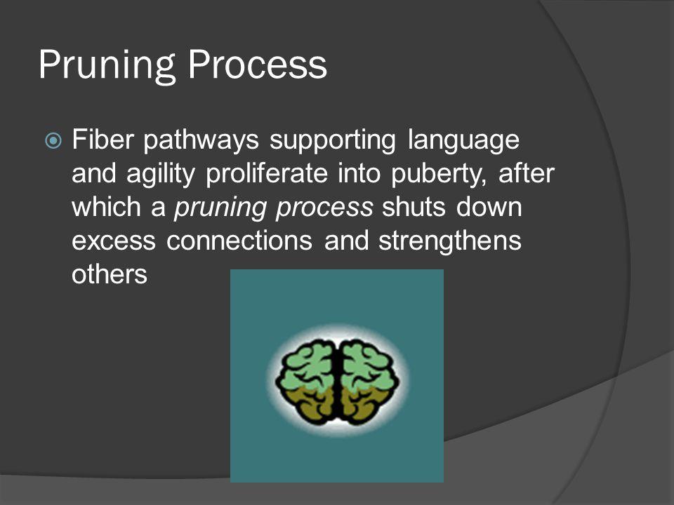 Pruning Process