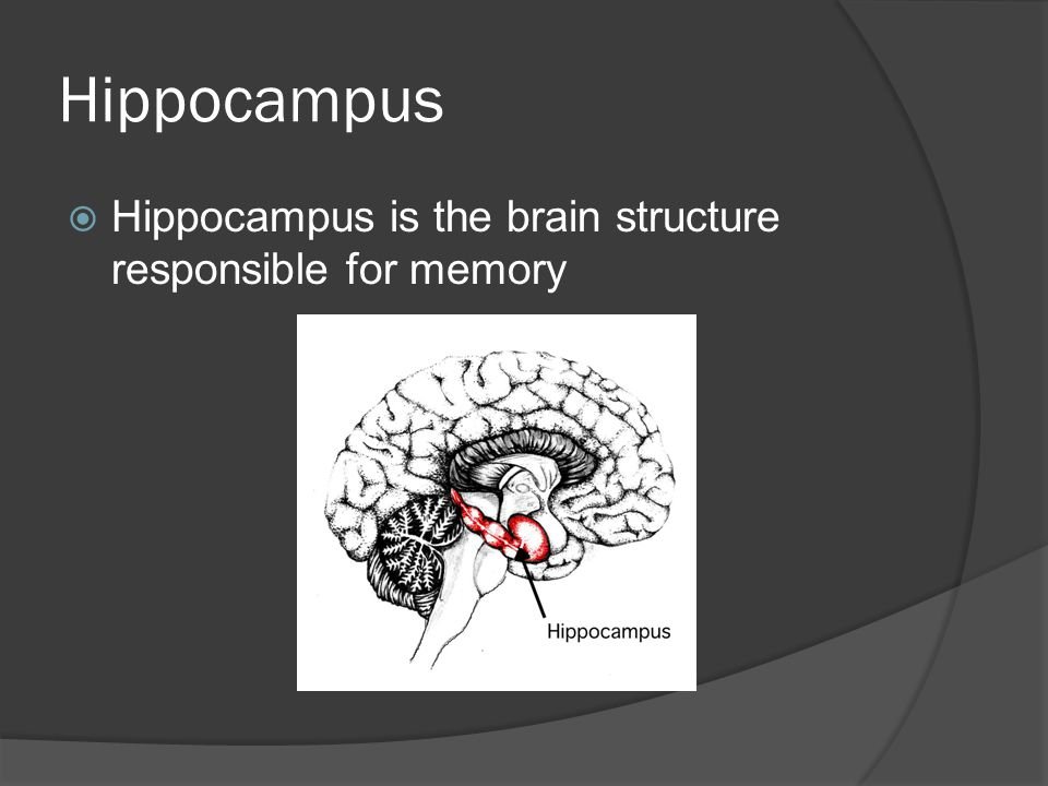 Hippocampus Hippocampus is the brain structure responsible for memory
