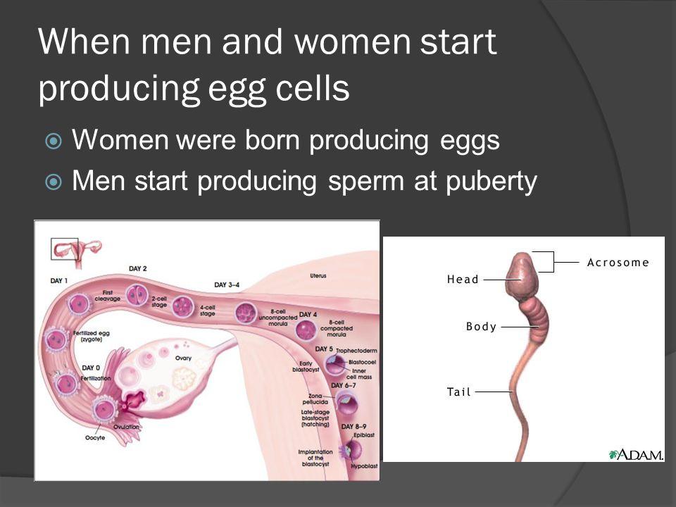 When men and women start producing egg cells