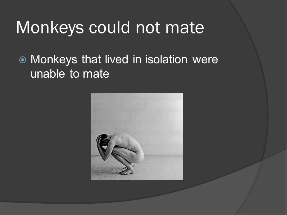 Monkeys could not mate Monkeys that lived in isolation were unable to mate