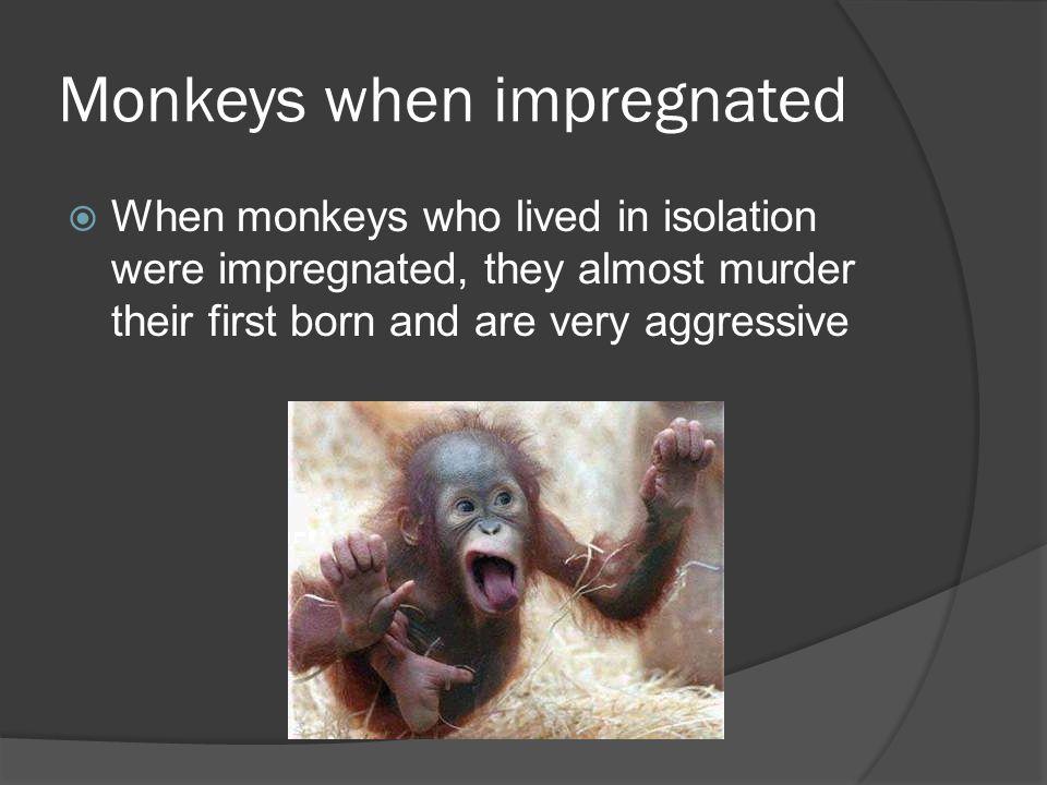 Monkeys when impregnated